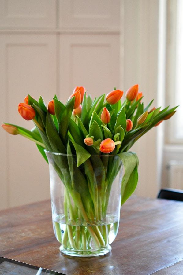 tulpen-2322