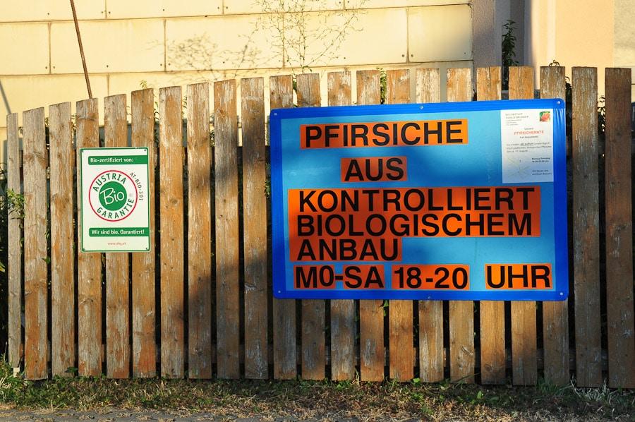 pfirsiche_brunner-5852