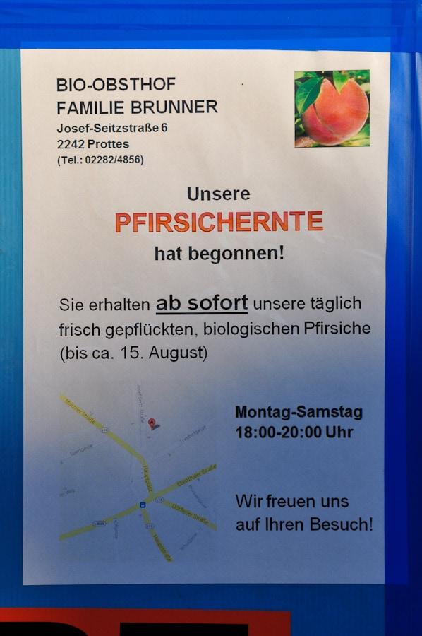 pfirsiche_brunner-5856